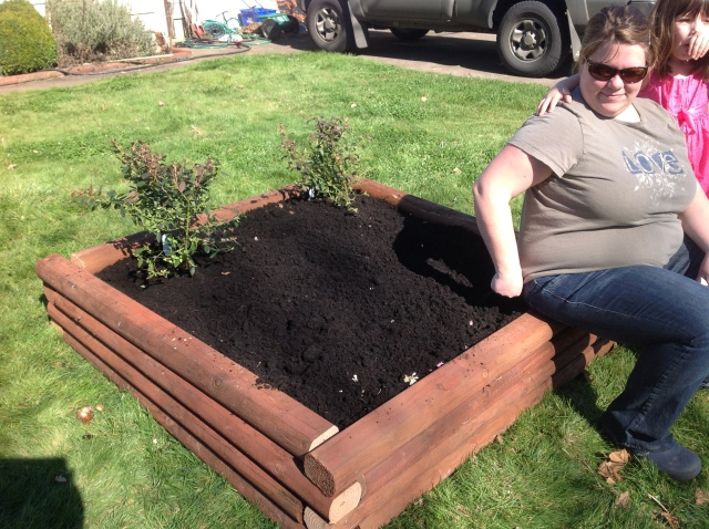 Dirt all in place and the bulbs and blueberry's planted