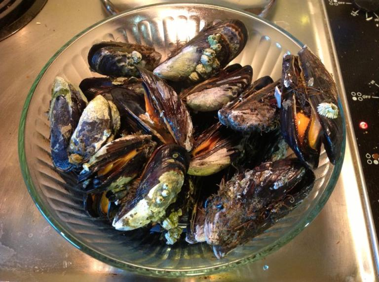 Mussels right after they opened from their steam bath