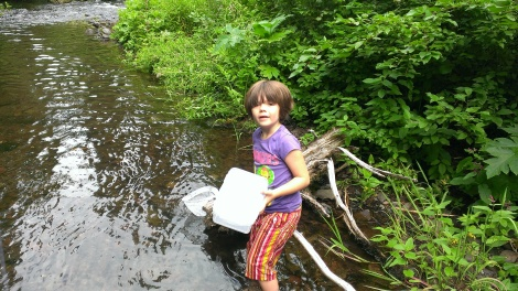 Releasing the critters back into the creek for them to live another day