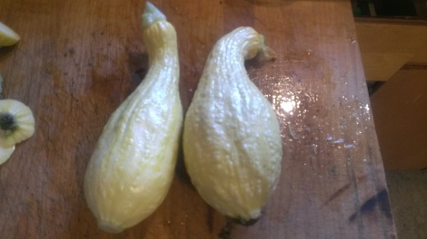 A couple of squash from the garden