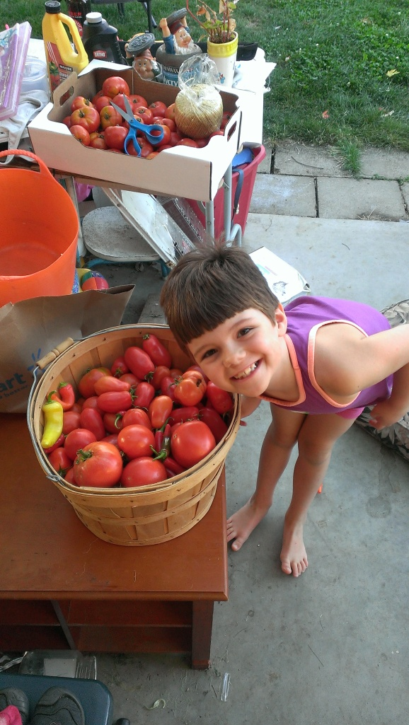 First picking of tomatoes