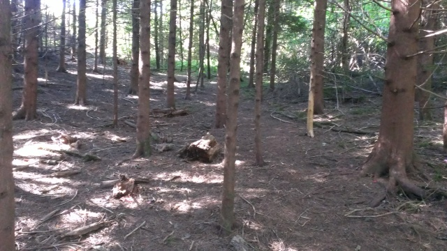The only dark dense part of little trees